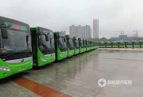 河南:漯河再次投入260台新能源纯电动公交车